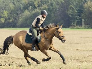 HD Wallpaper | Background Image girl, horse, grass