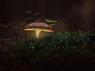 Glowing Mushroom wallpaper