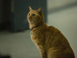 Goose The Cat in Captain Marvel image