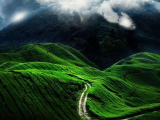 Grass Covered Mountain Road wallpaper