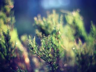 grass, plant, leaves wallpaper