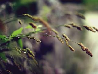 HD Wallpaper | Background Image grass, plant, stem