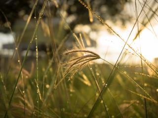 grass, sunlight, close-up wallpaper