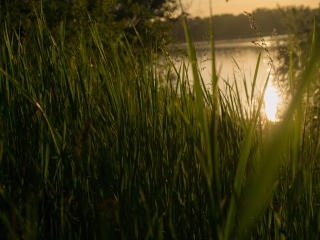 Grass Sunset wallpaper