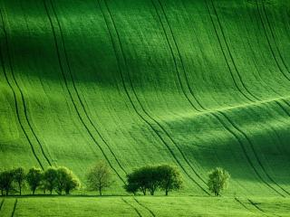 Green Meadow Field wallpaper