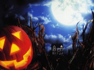 halloween, holiday, pumpkin wallpaper
