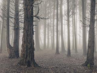 HD Cloudy Forest wallpaper