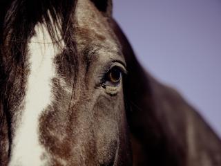 horse, eyes, mane wallpaper