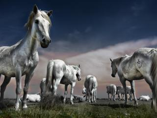 Horse Group wallpaper