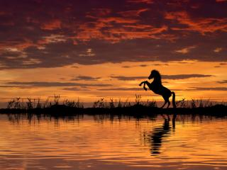 Horse Reflection And Sunset wallpaper