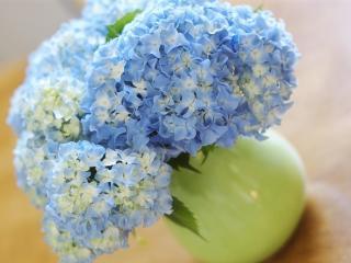 hydrangea, bouquet, vase wallpaper
