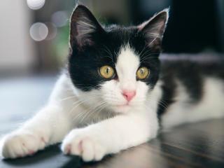 kitten, cat, spotted wallpaper
