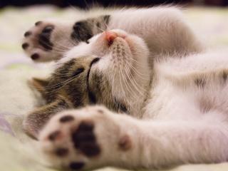 kitten, lying, baby wallpaper