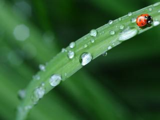 ladybug, leaves, grass wallpaper