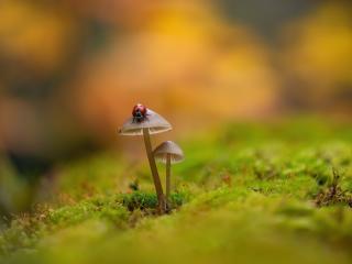 Ladybug On Mushroom wallpaper