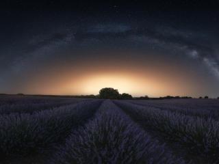 Lavender 4K Amazing Field wallpaper