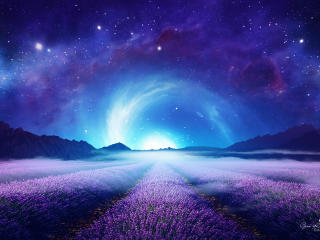 Lavender Field at Starry Night wallpaper