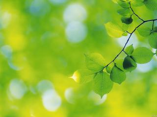 leaf, branch, plant wallpaper