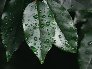 HD Wallpaper | Background Image leaf, drop, plant
