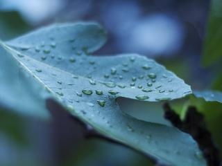 leaf, drop, surface wallpaper