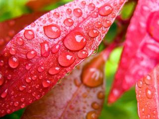 HD Wallpaper | Background Image leaves, macro, drops