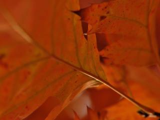 HD Wallpaper | Background Image leaves, plant, streaks