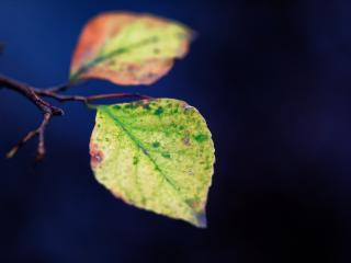 leaves, spots, branch wallpaper