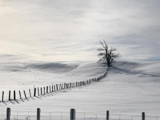 Lonely Tree In Snow Field wallpaper