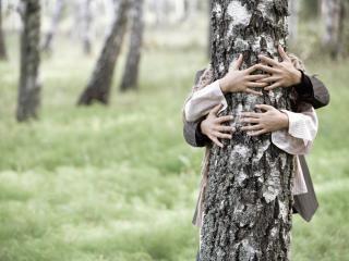 love, couple, tree wallpaper