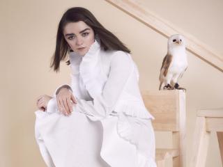 Maisie Williams Photoshoot with Owl wallpaper
