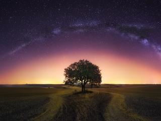 Milky Way Tree Field wallpaper