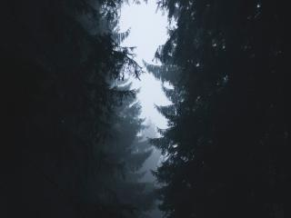 Misty Forest Photography 2021 wallpaper