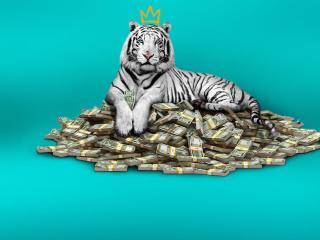 Netflix The White Tiger wallpaper