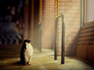 penguin, light, window wallpaper