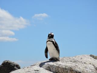 penguin, rocks, sky wallpaper