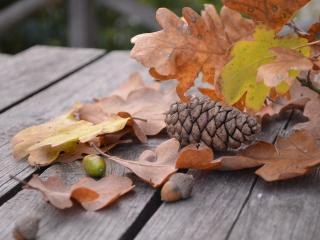 pine cone, acorn, leaves wallpaper