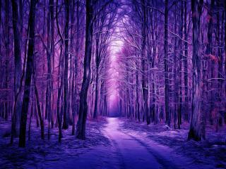 Purple Winter Forest wallpaper