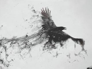 Raven Bird Flying wallpaper