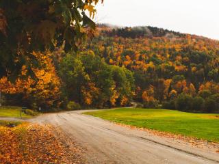 Road Between Green Yellow Autumn Fall Field wallpaper