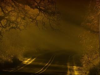 road, night, fog wallpaper