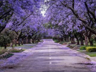 Road Purple Trees wallpaper