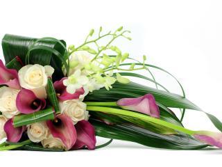 roses, calla lilies, freesia wallpaper