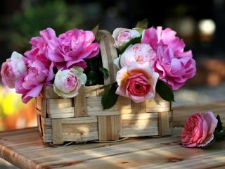 roses, flowers, garden wallpaper
