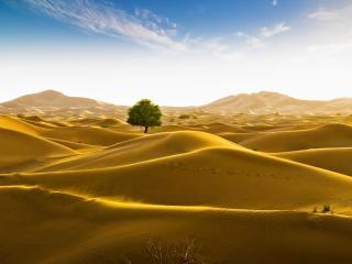 Rub' al Khali desert on the border of Oman and the Emirate of Dubai wallpaper