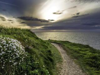 sea, grass, evening wallpaper