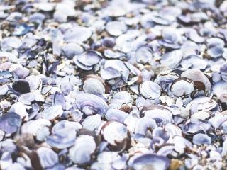 seashells, beach, sea wallpaper