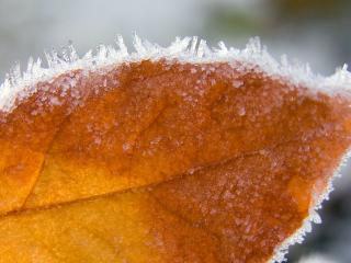 HD Wallpaper | Background Image sheet, frost, dry