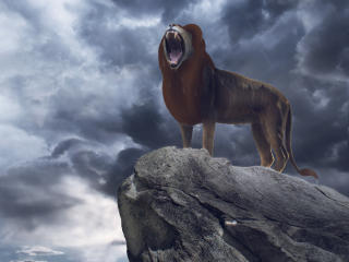 Simba in The Lion King 2019 Movie wallpaper