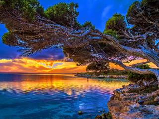 Slanting Tree Above Ocean at Sunset wallpaper