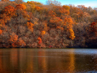 slope, forest, lake wallpaper